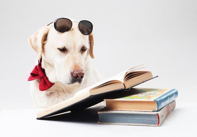 育児の疑問はネットにお任せの現代…育児書を読んだことある?