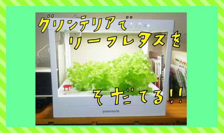 家の中で野菜づくり!?子どもと一緒に家庭内菜園しよう