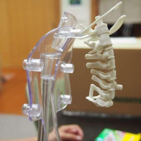 前回つくった骨をとりつけると…なんだかこういう生き物みたいです