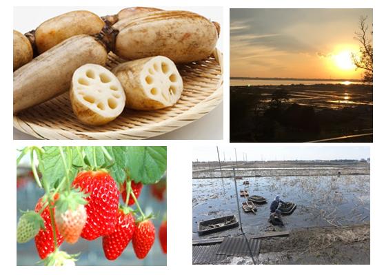 【謝礼・交通費&うれしいおみやげ付き】土浦の豊かな自然と食の恵みを、見て・触れて・感じる、楽しい社会科見学ツアー!