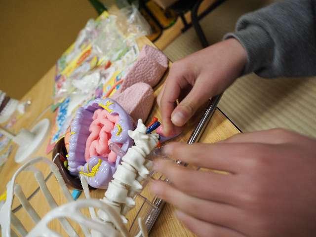 椎骨と椎骨のあいだには軟骨(なんこつ)というものがあって、椎骨がすりへらないようにしているんだボーン(とホネッキーが言ってました)