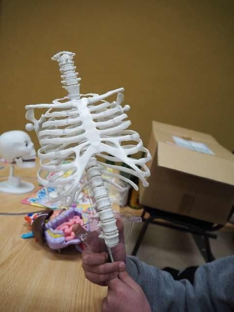 できました。人体模型感、さらにアップ。