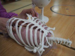 まず左右の肺を肋骨の中へ入れます