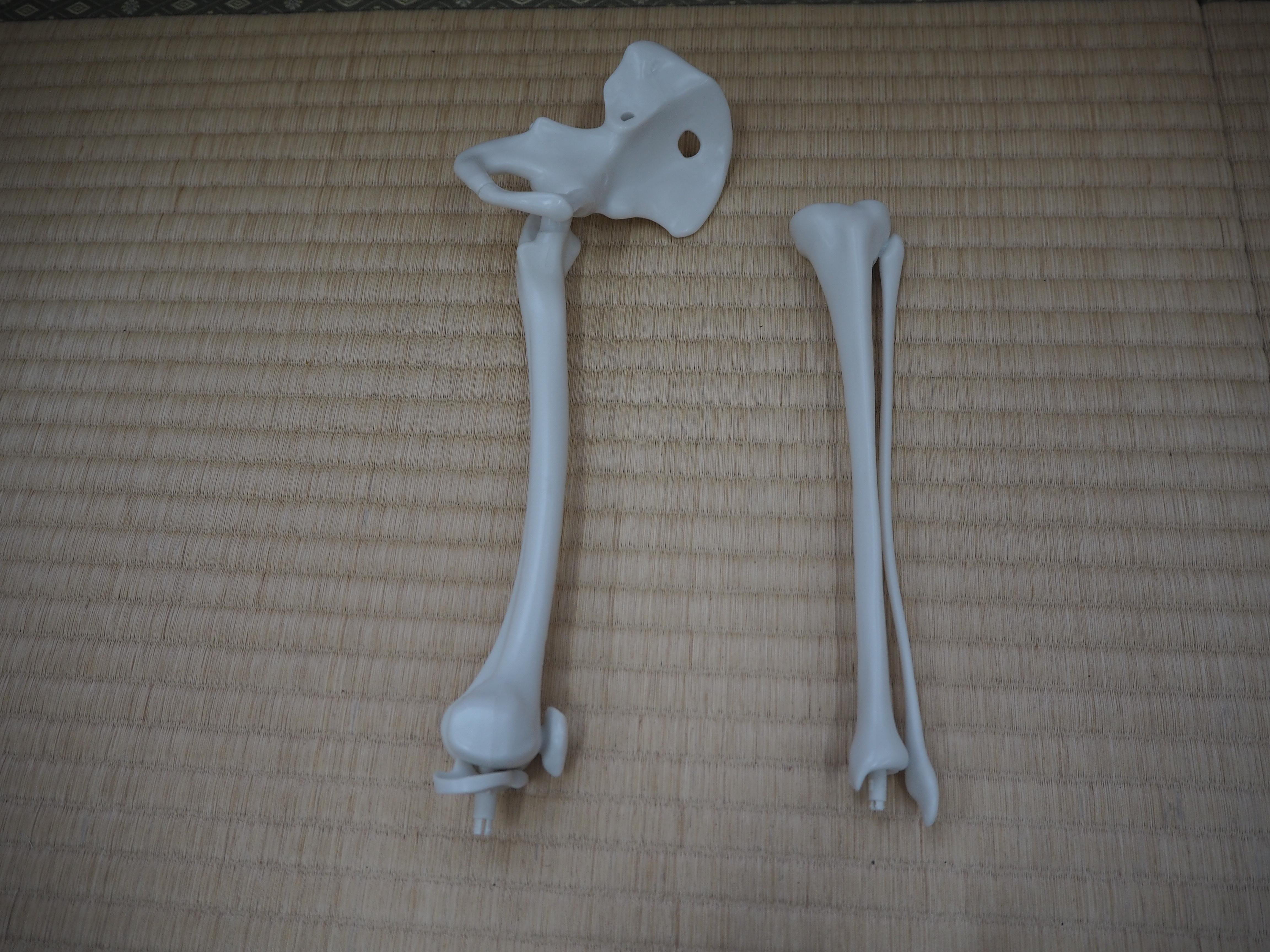 次に膝から下の骨(けい骨とひ骨)をつなぎ、さらに左のあしの骨(合体してひとつのパーツになっている)を足首の関節でつなぎます。