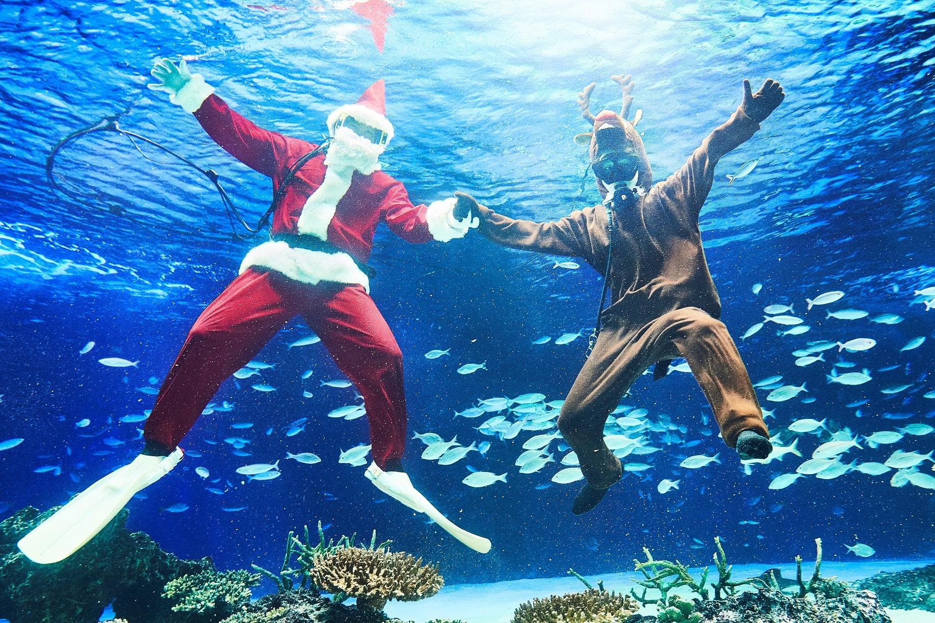 水中パフォーマンスタイムはクリスマスバージョンで、大水槽「サンシャインラグーン」でサンタとトナカイが登場。