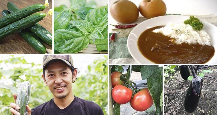 【地方のおいしいものをおトクにお届け 第一弾!】三重県明和町の「新鮮野菜」と「話題のカレー」をセットでどうぞ♪