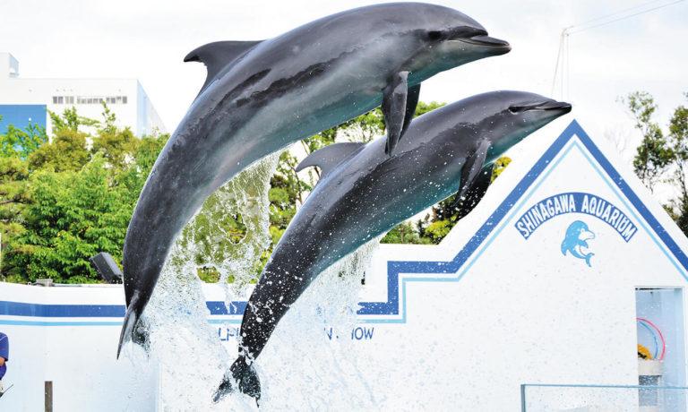 10月から大人気イルカたちのショーが再開♪しながわ水族館と「イルカトレーナー体験」のおでかけモニター募集!